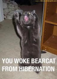 bearcat